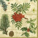 Paper Napkins - Taxus Baccata Cream [L423160]