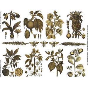 ARTchix Collage Sheet - M176 Beautiful Botanicals