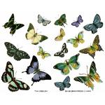 Joggles Collage Sheets - Blue And Green Butterflies II [JG401059]