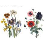 Joggles Collage Sheets - Half Sheet Florals [JG401005]
