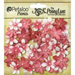 Petaloo Penny Lane Mini Pearl Daisies - Antique Red [1839-050]