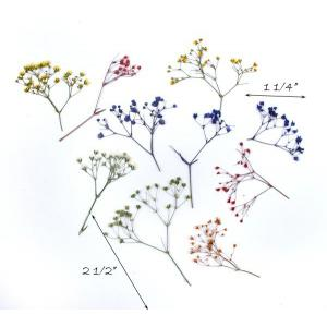 Pressed Flowers - Baby's Breath, Assorted