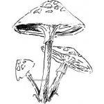 Stampotique Originals - [3010] Mushroom Group