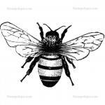Stampotique Originals - [3000] Medium Bee with Tiny Bee