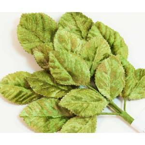 Velvet Leaves [16] Moss